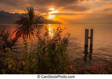 Flowers and Lake Geneva, Switzerland sunset