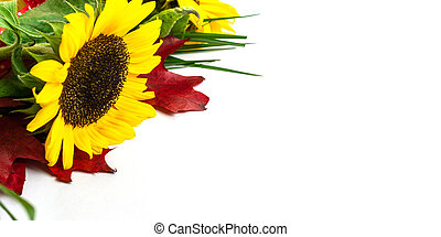 Flowers and leaves. Autumn background. Happy birthday concept