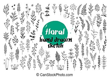 Flowers and leaves vector set, hand drawn doodle collection