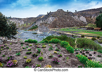 flowers and mountain river