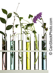 Flowers and plants in test tubes against a white background
