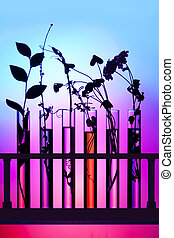 Flowers and plants in test tubes against a colorful...
