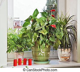 Flowers and red candles on window-sill