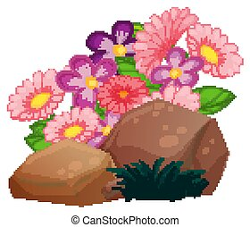 Flowers and rocks on white background
