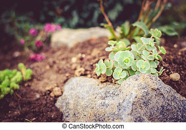 rock-garden - flowers and succulents in rock-garden