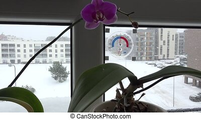 Flowers and thermometer on flat house window sill and snow fall outside. 4K