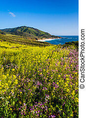 Flowers and view of the Pacific Coast at Garrapata State Park, California.
