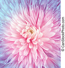 Flowers art closeup. Wedding holiday card