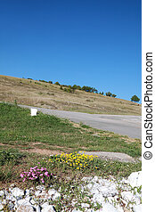 Flowers at Balkan Mountain (Stara Planina) National Park in Serbia Europe