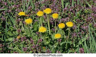 Flowers at meadow in spring
