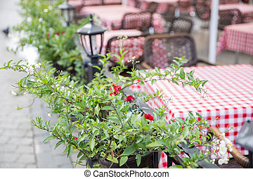 Flowers at table in cafe outside. Restaurant patio blurred on background