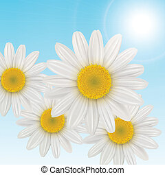 flowers background - background with daisies flowers, vector...