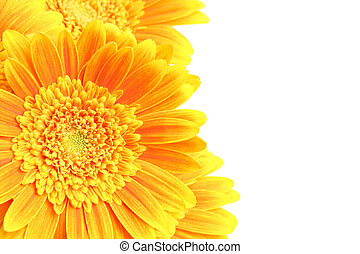 flowers background isolated