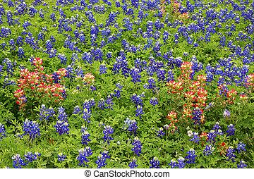 Flowers backgrouns - Bluebonnets, Texas national flowers, ...