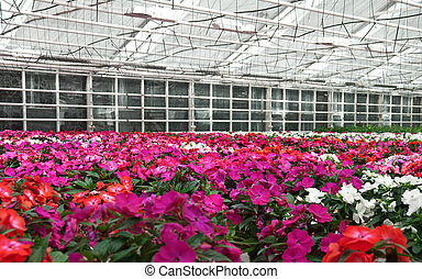Flowers blooming in a greenhouse
