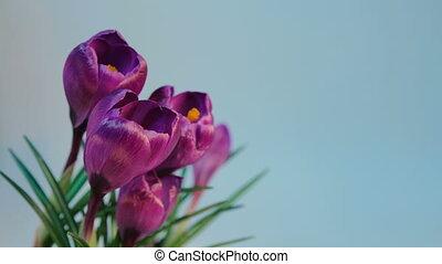Flowers Blooming Timelapse