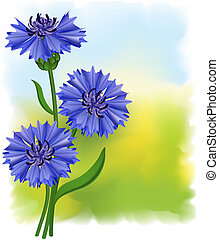 Flowers blue cornflower (Centaurea cyanus). Vector illustration.