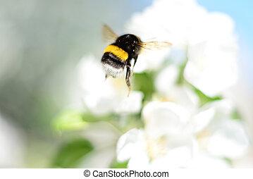 flowers., bumblebee, branca