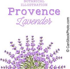 flowers., couronne, lavande