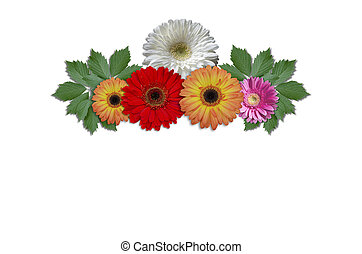 Flowers daisies with green ivy leav - Multicolored flowers...