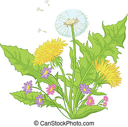 Flowers dandelions with leaves