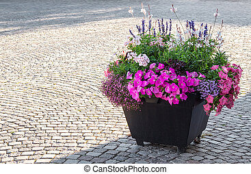 Flowers decorating a city square