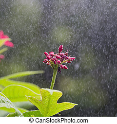 flowers, drops of water, shower