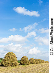 flowers drying on a haystack