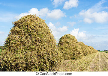 flowers drying on a haystack - Flowers drying in the autumn...