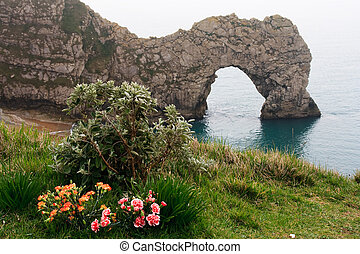 Foreground Flowers, Lulworth Cove, Durdle Door, Coastal Rock Arch