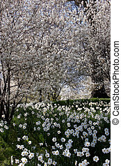 Flowers Everywhere - Blossoms everywhere, springtime in ...