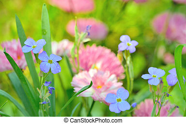 Flowers Field Background