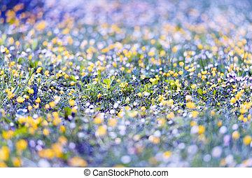 Flowers field in spring meadow