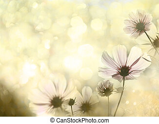 Flowers - Field of flowers and sunlight