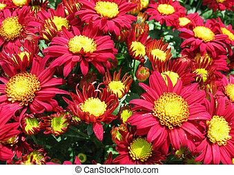 Flowers - Field of Fowers