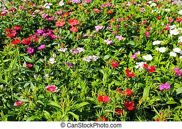 Flowers field.