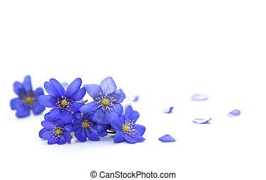 flowers., fjäder
