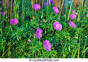 flowers., fleurir
