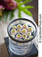 flowers floating on water in bottle, shallow depth of field