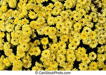 flowers., fond, jaune