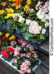 Flowers for sale in nursery