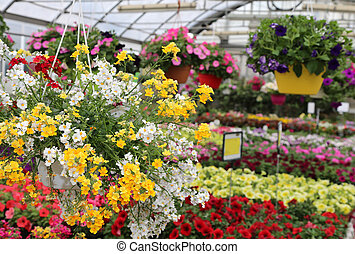 flowers for sale in the greenhouse