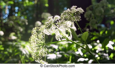 Flowers forest sun plants - Flowers forest plants sky...