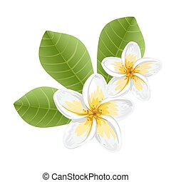 Flowers frangipani (Plumeria)