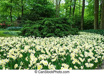 Flowers garden in nature park