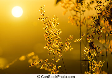 Flowers grass with light background.