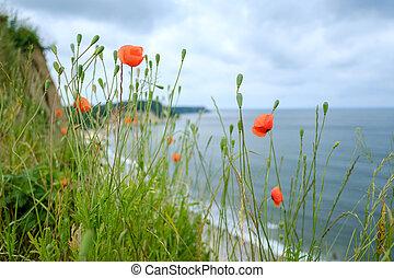 Flowers growing on cliff near sea