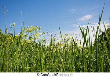flowers., herbe, vert