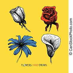 Flowers. Highly detailed hand drawn vector