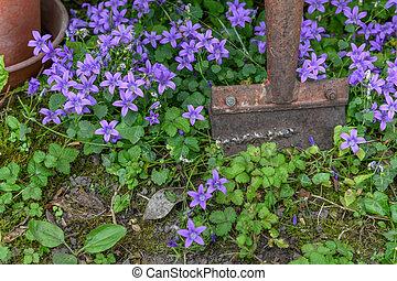 Flowers in a blooming garden.